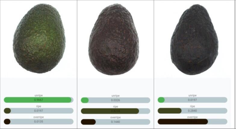 アボカドの分類結果.jpg