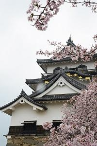 新入生オリエンテーション写真4(春の彦根城).jpg