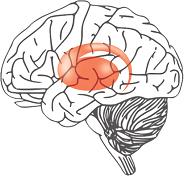 大脳基底核